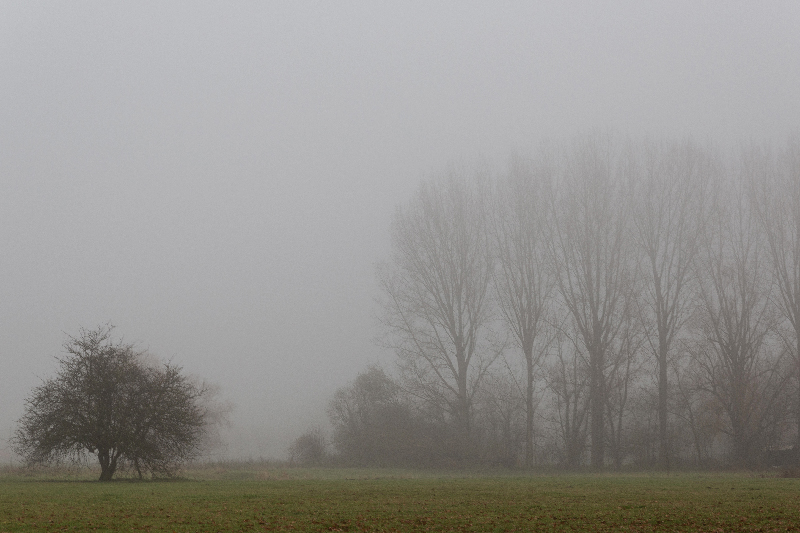 Brouillard - Marc Zommer Photographies