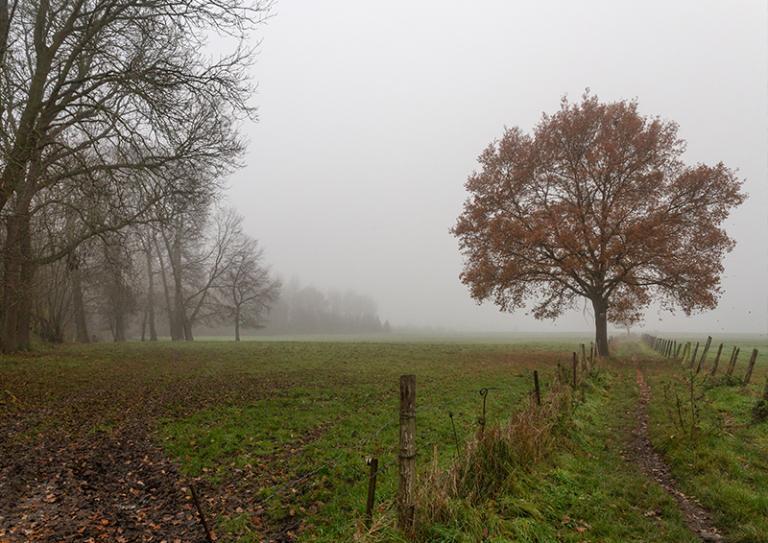 Brouillard - Marc Zommer Photographies