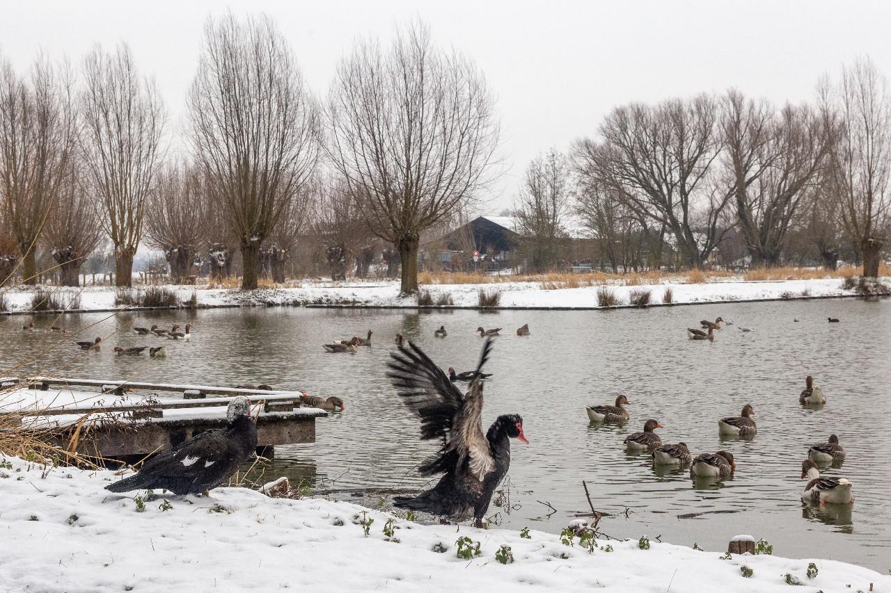 Parc des 6 Bonniers - Willems (59)