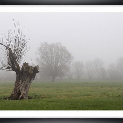Brouillard  Marc Zommer Photographies