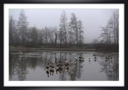Brouillard ch py06a marc zommer photographies