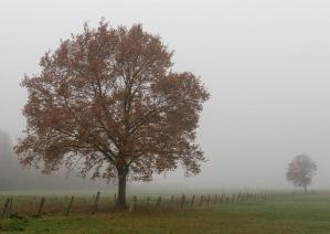 Brouillard marc zommer photographies 11