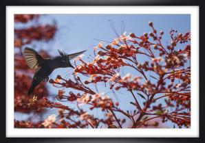 Colibri - Marc Zommer Photographies