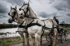 Chevaux marc zommer photographies 26